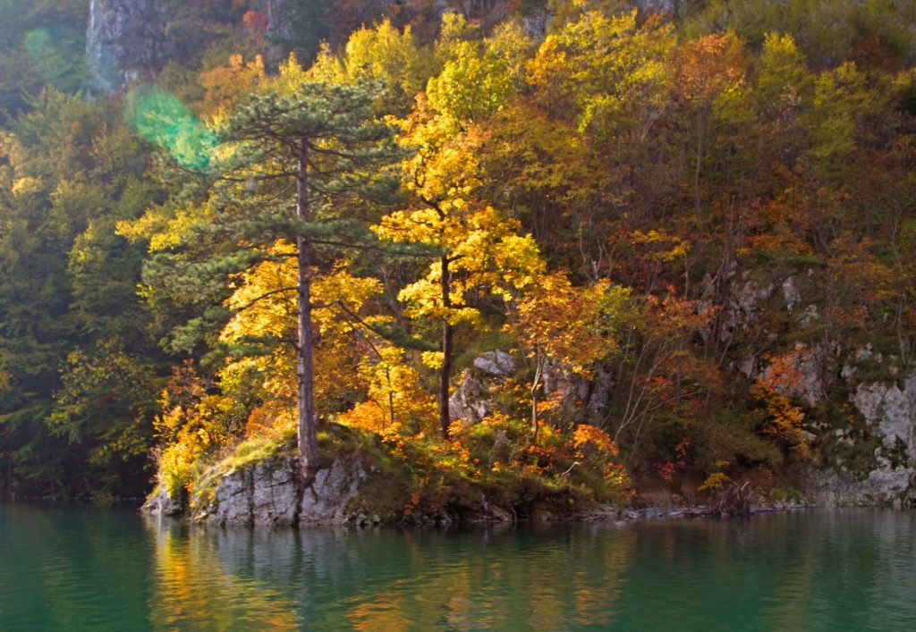 Green Drina  - Autumn